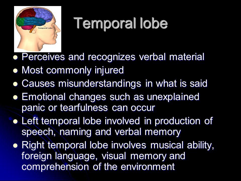 Temporal lobe Perceives and recognizes verbal material Perceives and recognizes verbal material Most commonly injured Most commonly injured Causes mis