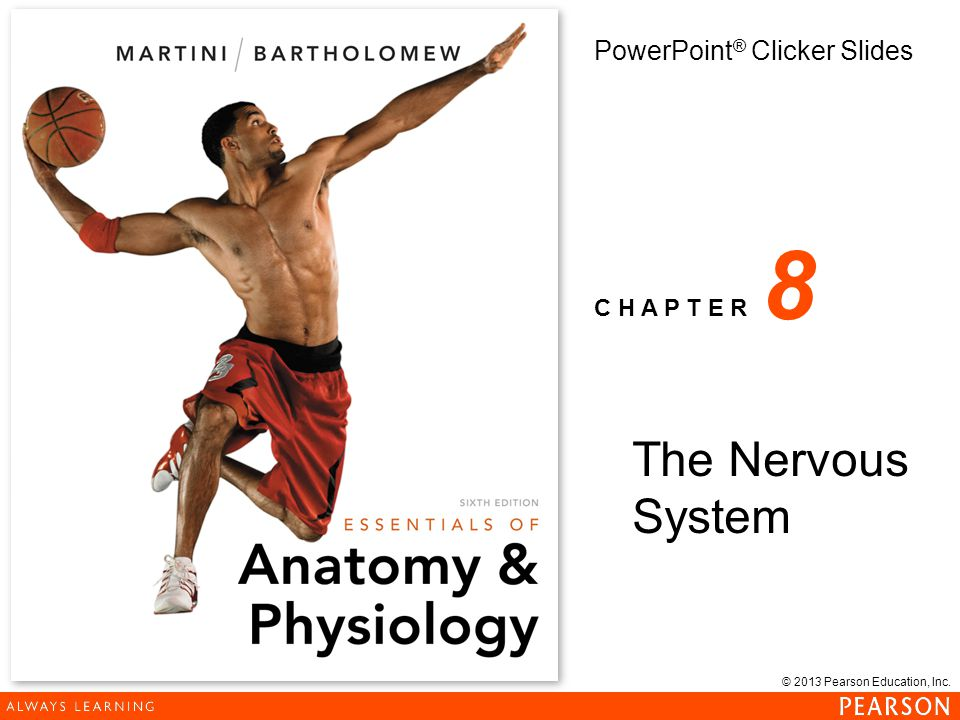 © 2013 Pearson Education, Inc. PowerPoint ® Clicker Slides C H A P T E R The Nervous System 8