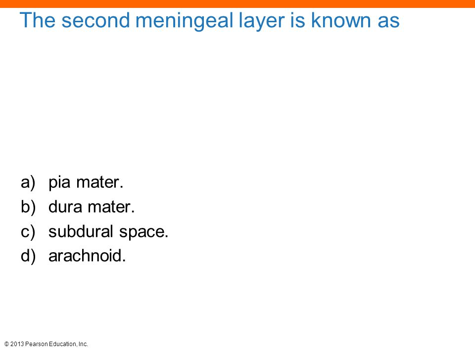 © 2013 Pearson Education, Inc. The second meningeal layer is known as a)pia mater. b)dura mater. c)subdural space. d)arachnoid.