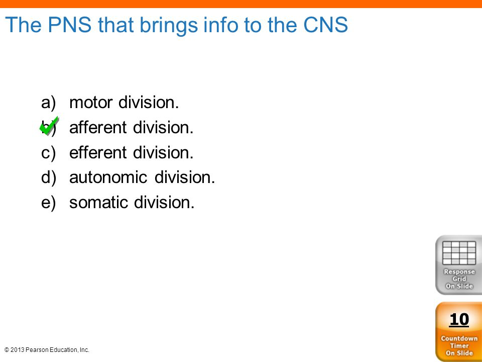 © 2013 Pearson Education, Inc. The PNS that brings info to the CNS a)motor division. b)afferent division. c)efferent division. d)autonomic division. e