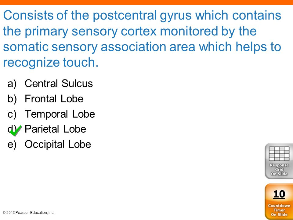 © 2013 Pearson Education, Inc. Consists of the postcentral gyrus which contains the primary sensory cortex monitored by the somatic sensory associatio