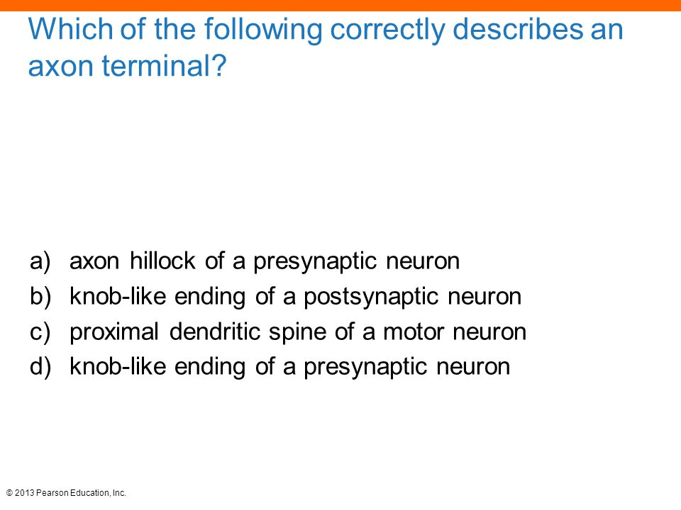 © 2013 Pearson Education, Inc.Which of the following correctly describes an axon terminal.