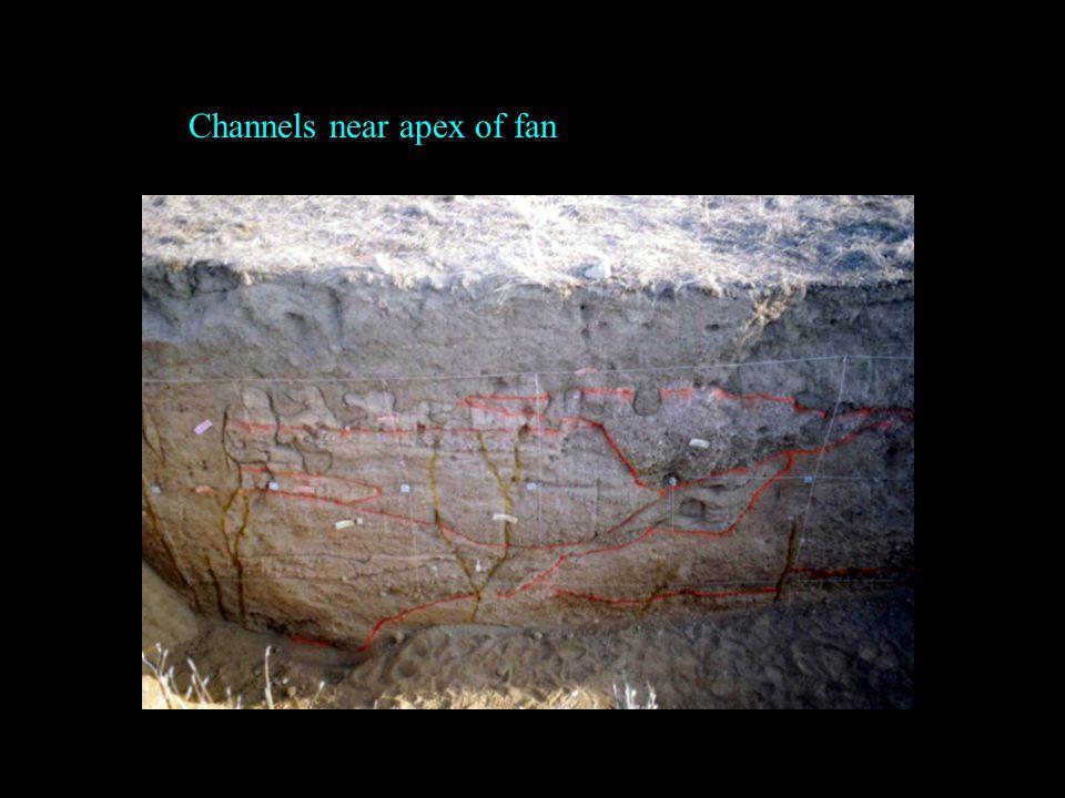 Channels near apex of fan