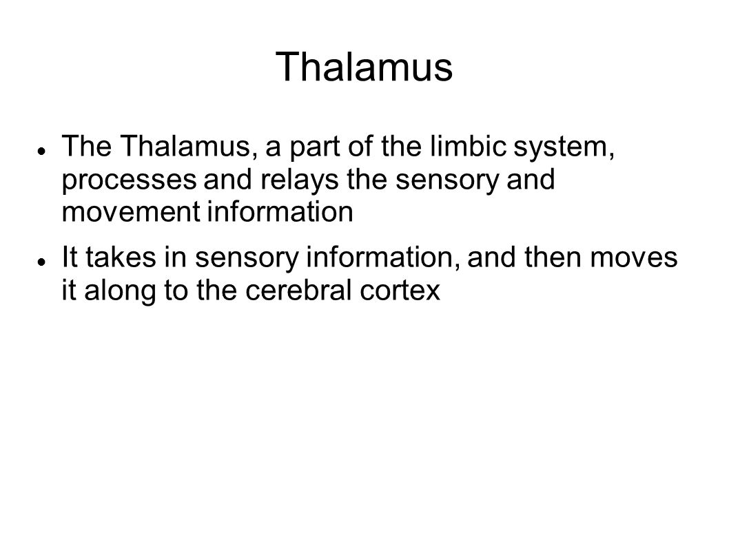 Thalamus The Thalamus, a part of the limbic system, processes and relays the sensory and movement information It takes in sensory information, and then moves it along to the cerebral cortex