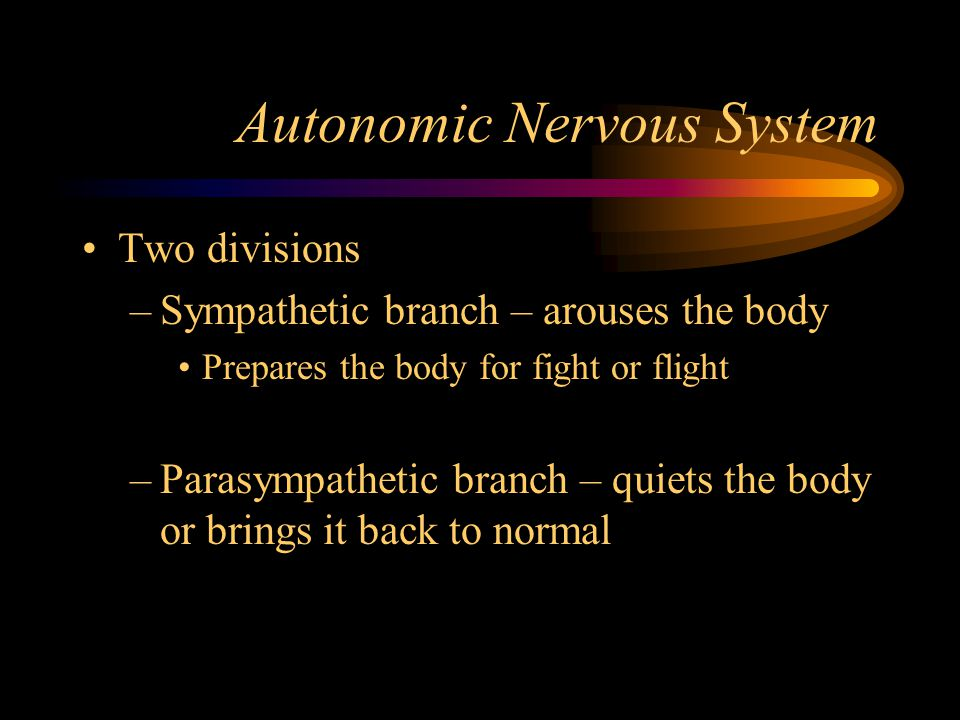 Autonomic Nervous System Two divisions –Sympathetic branch – arouses the body Prepares the body for fight or flight –Parasympathetic branch – quiets t