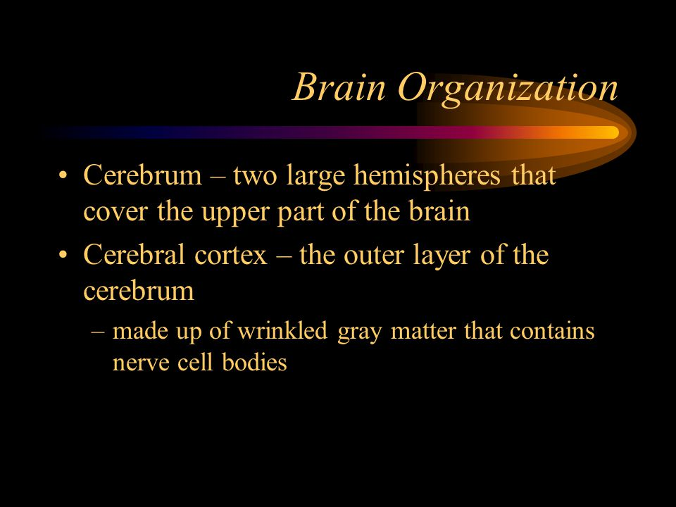Brain Organization Cerebrum – two large hemispheres that cover the upper part of the brain Cerebral cortex – the outer layer of the cerebrum –made up