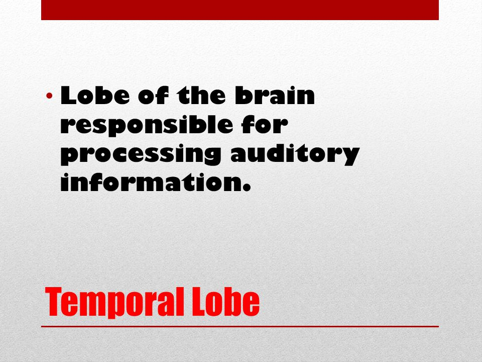 Temporal Lobe Lobe of the brain responsible for processing auditory information.