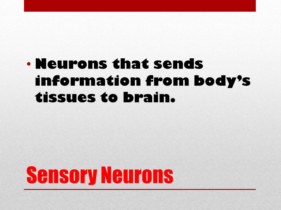 Sensory Neurons Neurons that sends information from body's tissues to brain.