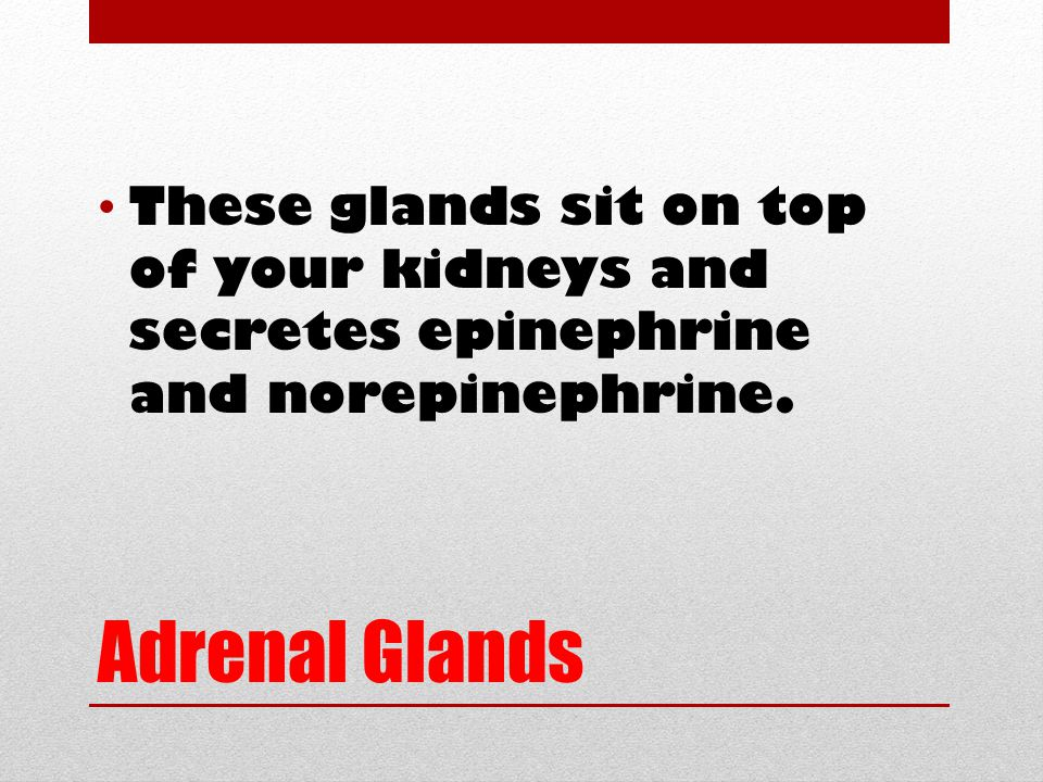 Adrenal Glands These glands sit on top of your kidneys and secretes epinephrine and norepinephrine.
