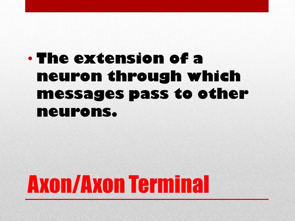 Axon/Axon Terminal The extension of a neuron through which messages pass to other neurons.