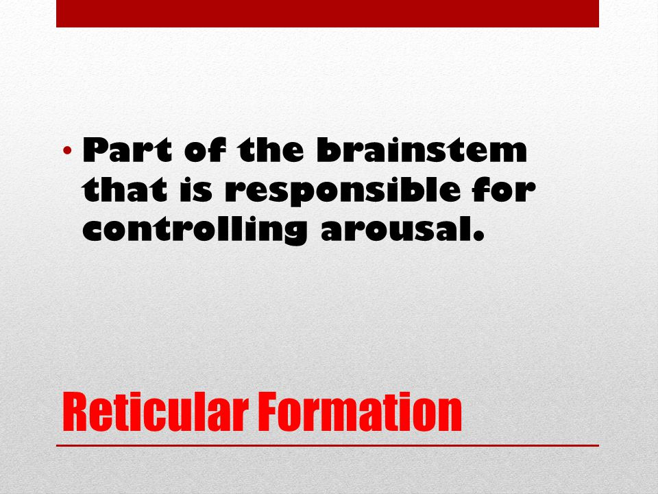 Reticular Formation Part of the brainstem that is responsible for controlling arousal.