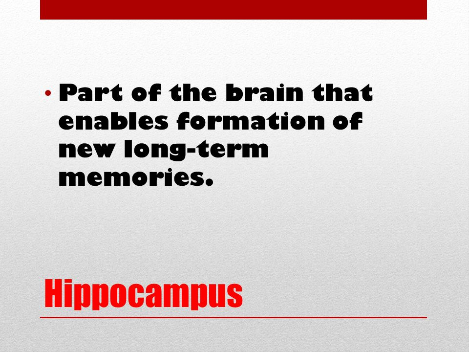 Hippocampus Part of the brain that enables formation of new long-term memories.