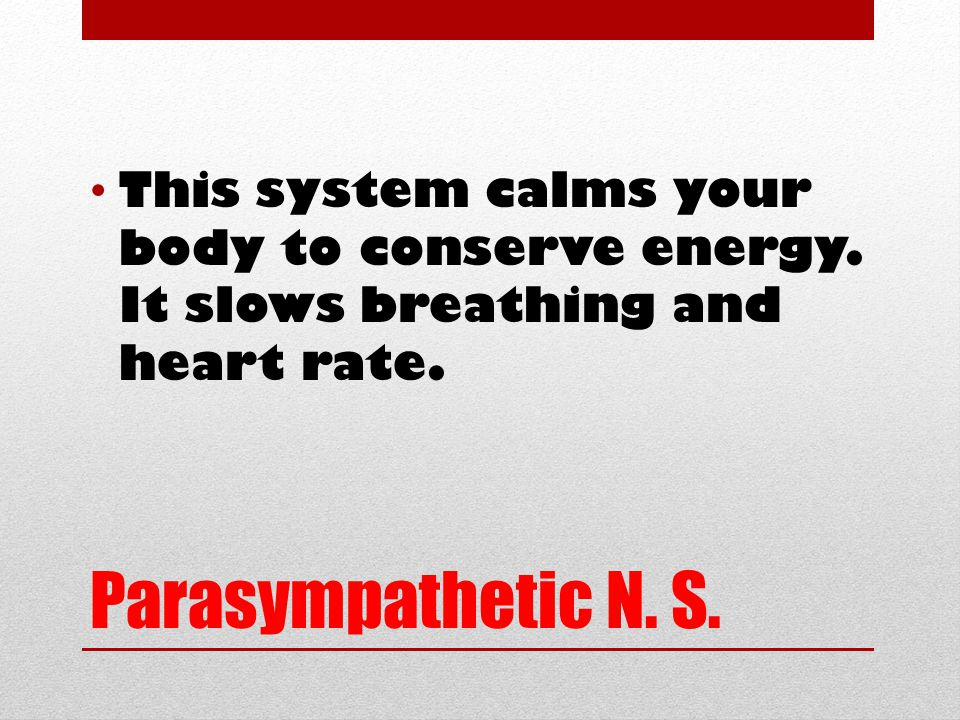 Parasympathetic N. S. This system calms your body to conserve energy.