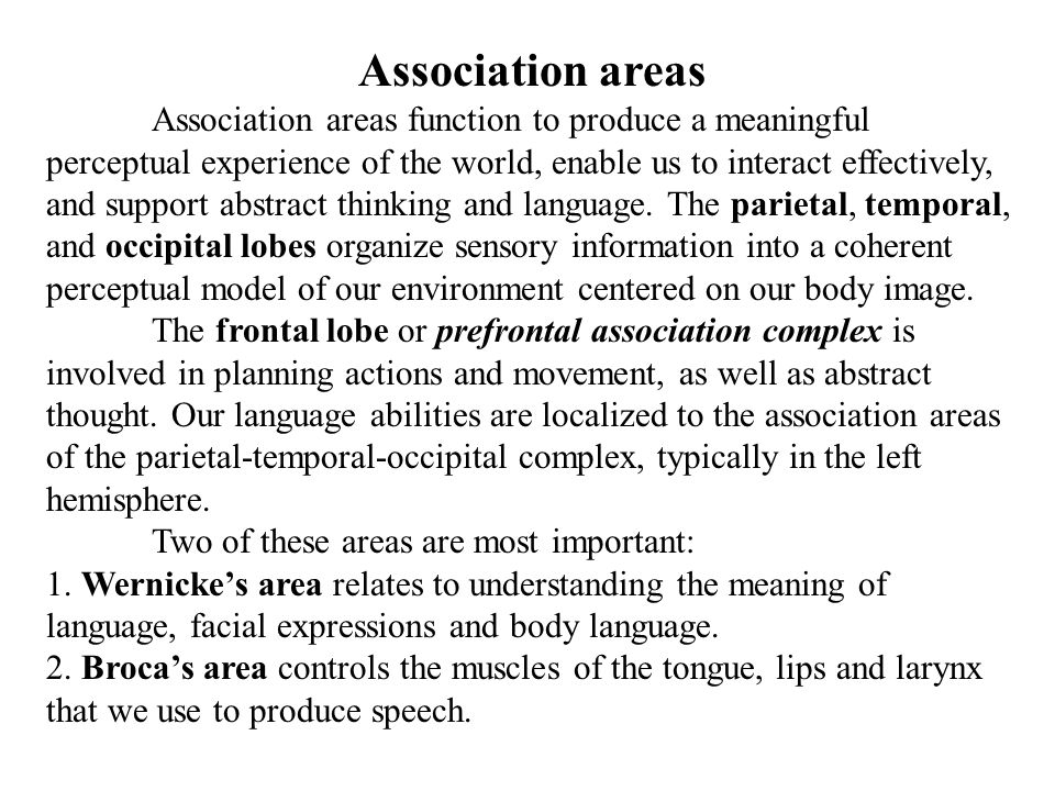 Association areas Association areas function to produce a meaningful perceptual experience of the world, enable us to interact effectively, and suppor