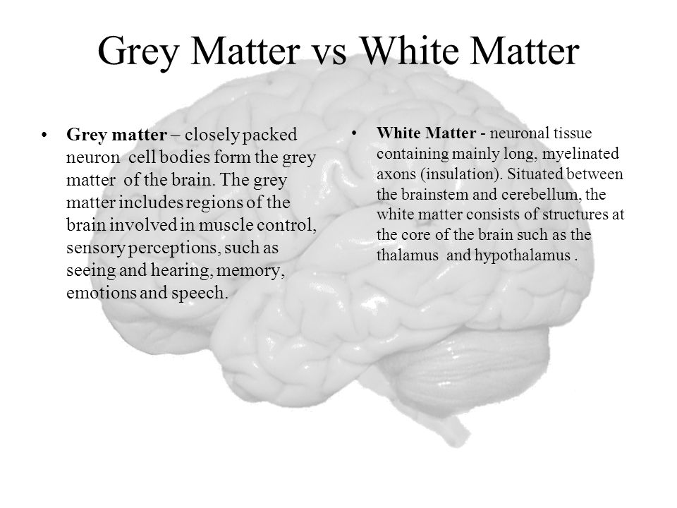 Grey Matter vs White Matter Grey matter – closely packed neuron cell bodies form the grey matter of the brain.