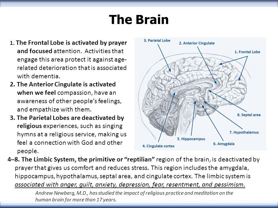 Frontal Lobe Motor Functions Higher Order Functions Planning Reasoning Judgment Impulse Control Memory
