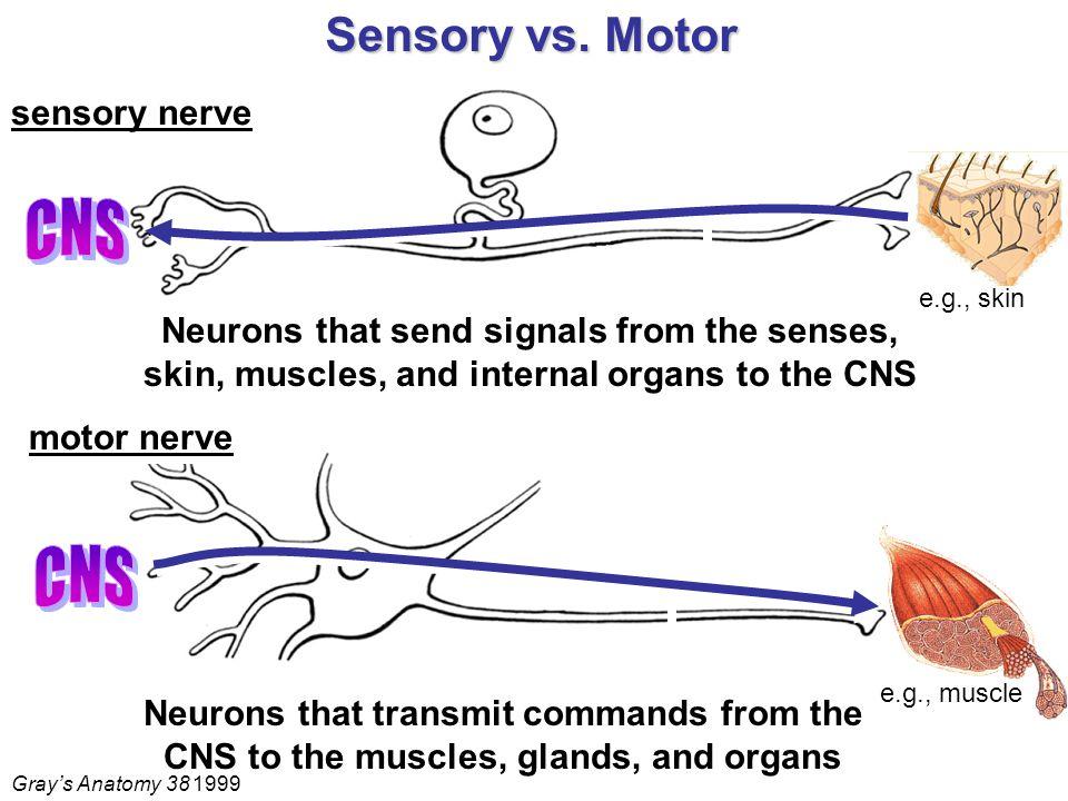 Sensory vs.