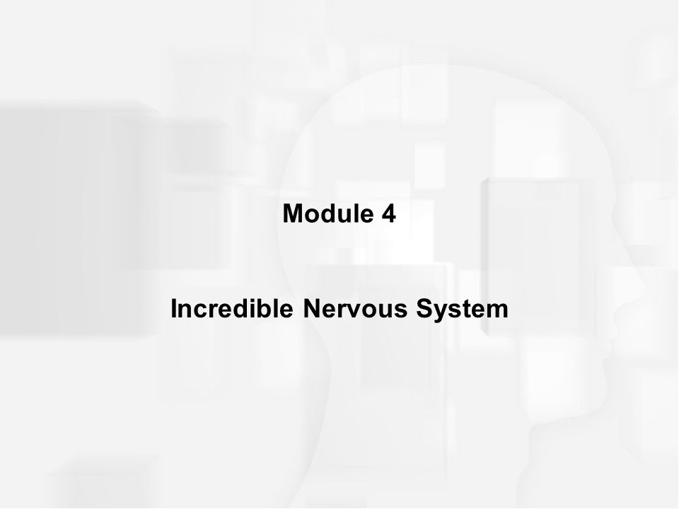 Module 4 Incredible Nervous System