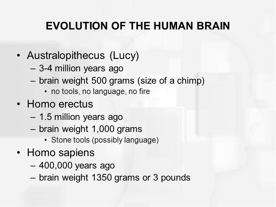 Australopithecus (Lucy) –3-4 million years ago –brain weight 500 grams (size of a chimp) no tools, no language, no fire Homo erectus –1.5 million year