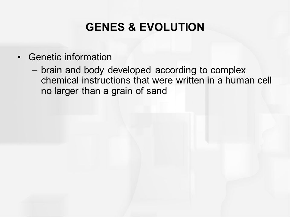 GENES & EVOLUTION Genetic information –brain and body developed according to complex chemical instructions that were written in a human cell no larger