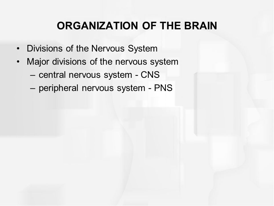 ORGANIZATION OF THE BRAIN Divisions of the Nervous System Major divisions of the nervous system –central nervous system - CNS –peripheral nervous syst