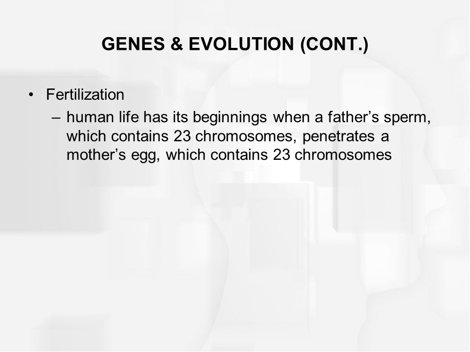 GENES & EVOLUTION (CONT.) Fertilization –human life has its beginnings when a father's sperm, which contains 23 chromosomes, penetrates a mother's egg