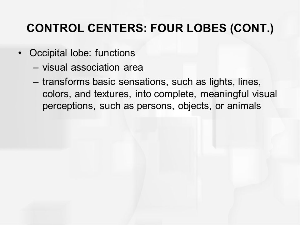 Occipital lobe: functions –visual association area –transforms basic sensations, such as lights, lines, colors, and textures, into complete, meaningfu