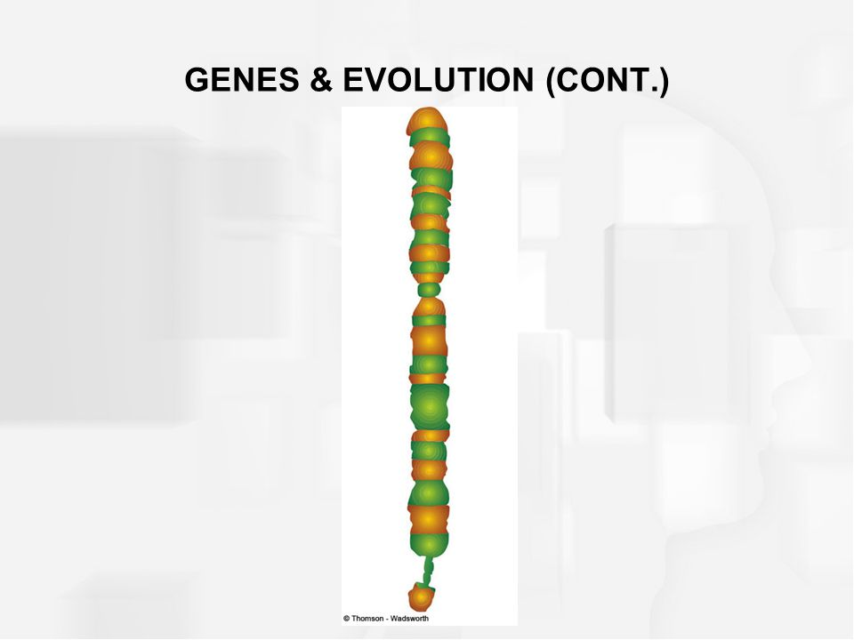 Genes and proteins –Gene a specific segment on the long strand of DNA that contains instructions for making proteins –Proteins chemical building blocks from which all the parts of the brain and body are constructed