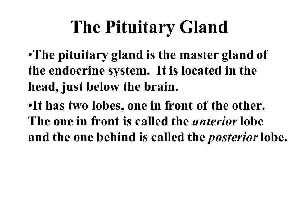 The Pituitary Gland The pituitary gland is the master gland of the endocrine system.