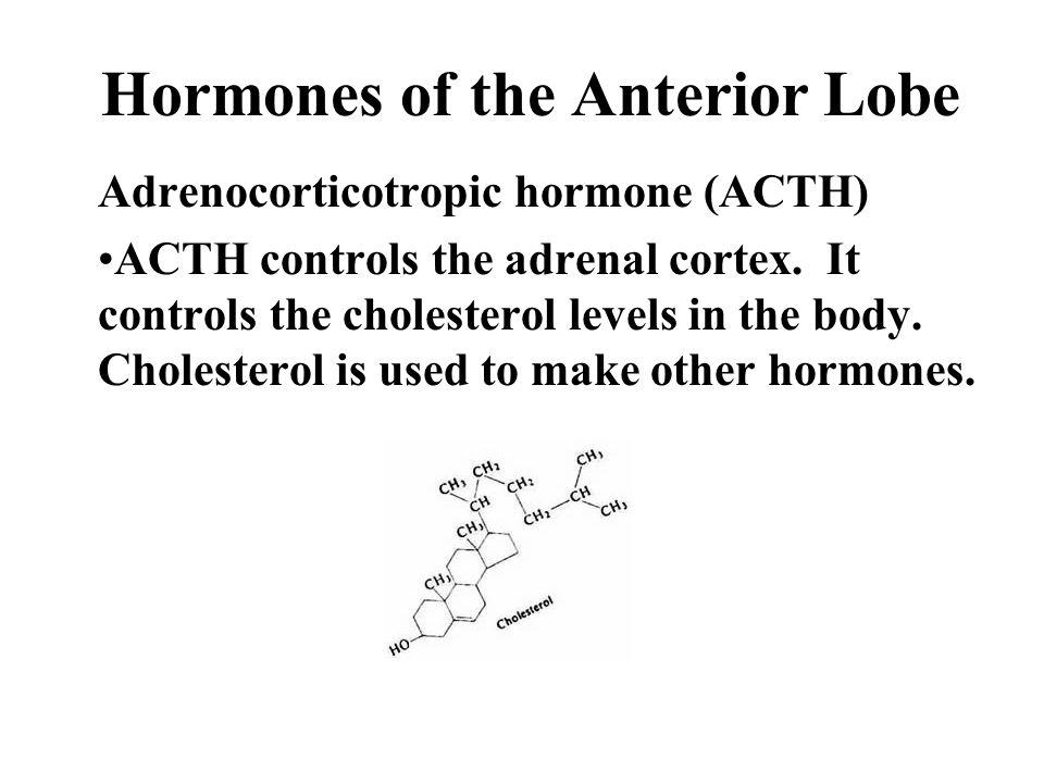 Hormones of the Anterior Lobe Adrenocorticotropic hormone (ACTH) ACTH controls the adrenal cortex.