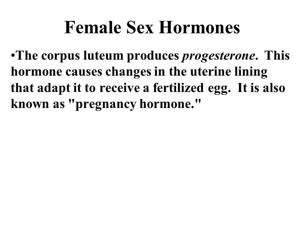 Female Sex Hormones The corpus luteum produces progesterone.