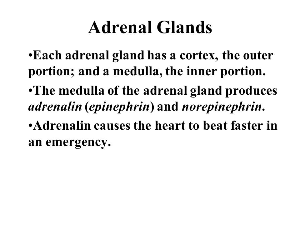 Adrenal Glands Each adrenal gland has a cortex, the outer portion; and a medulla, the inner portion.