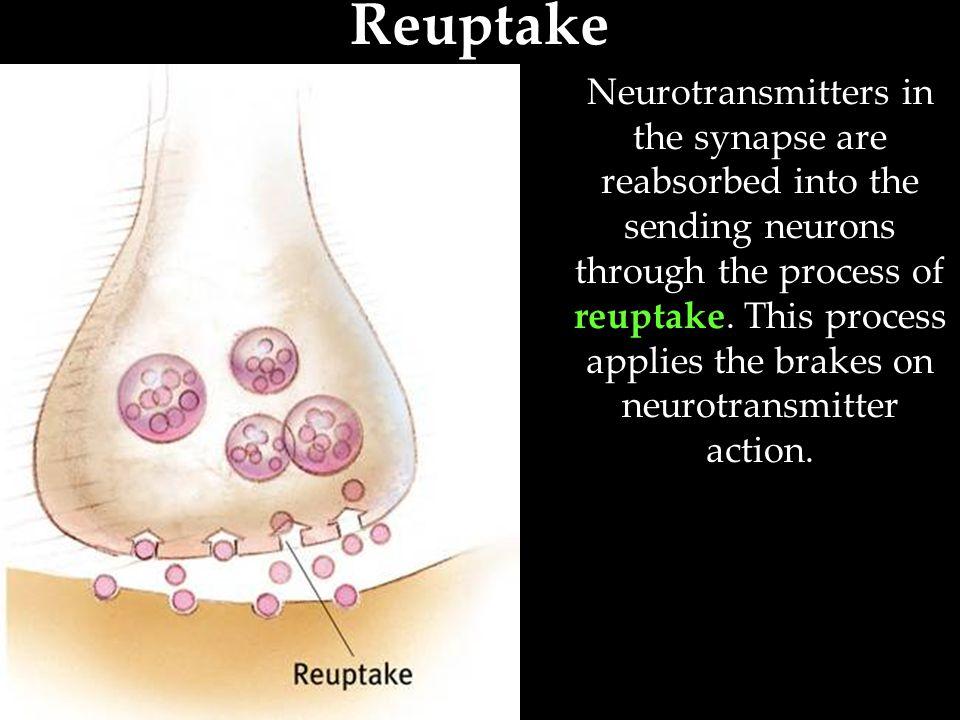 Neurotransmitters Table 2.1