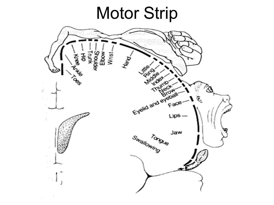Motor Strip