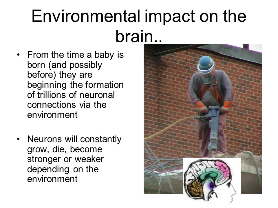 Environmental impact on the brain.. From the time a baby is born (and possibly before) they are beginning the formation of trillions of neuronal conne