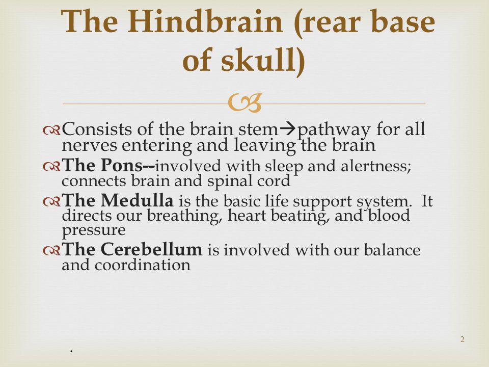 Parietal lobe Occipital lobe Frontal lobe Temporal lobe