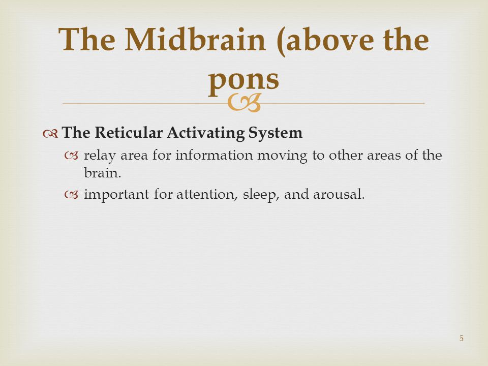   The Reticular Activating System  relay area for information moving to other areas of the brain.