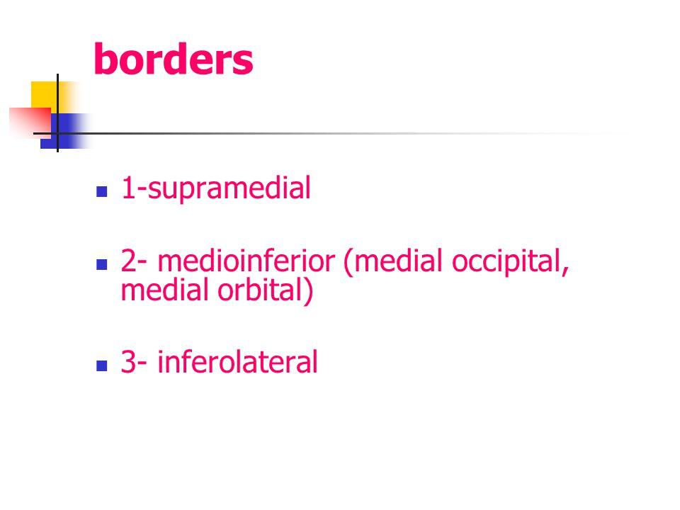 borders 1-supramedial 2- medioinferior (medial occipital, medial orbital) 3- inferolateral