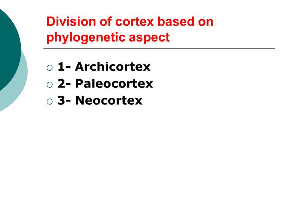 Division of cortex based on phylogenetic aspect  1- Archicortex  2- Paleocortex  3- Neocortex