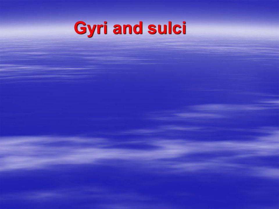 Gyri and sulci