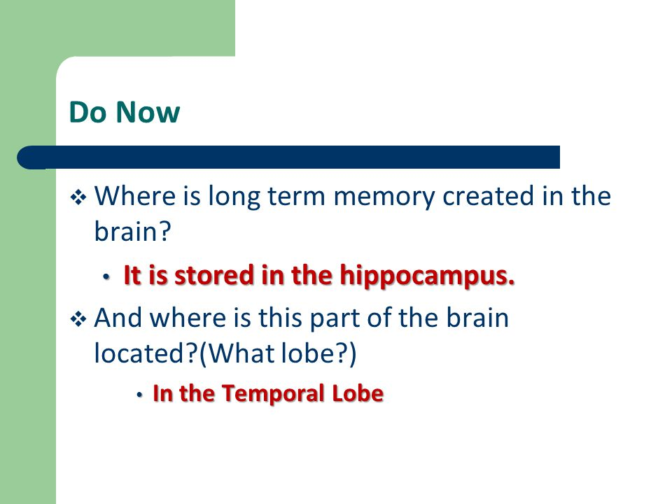 Do Now  Where is long term memory created in the brain? It is stored in the hippocampus. It is stored in the hippocampus.  And where is this part of