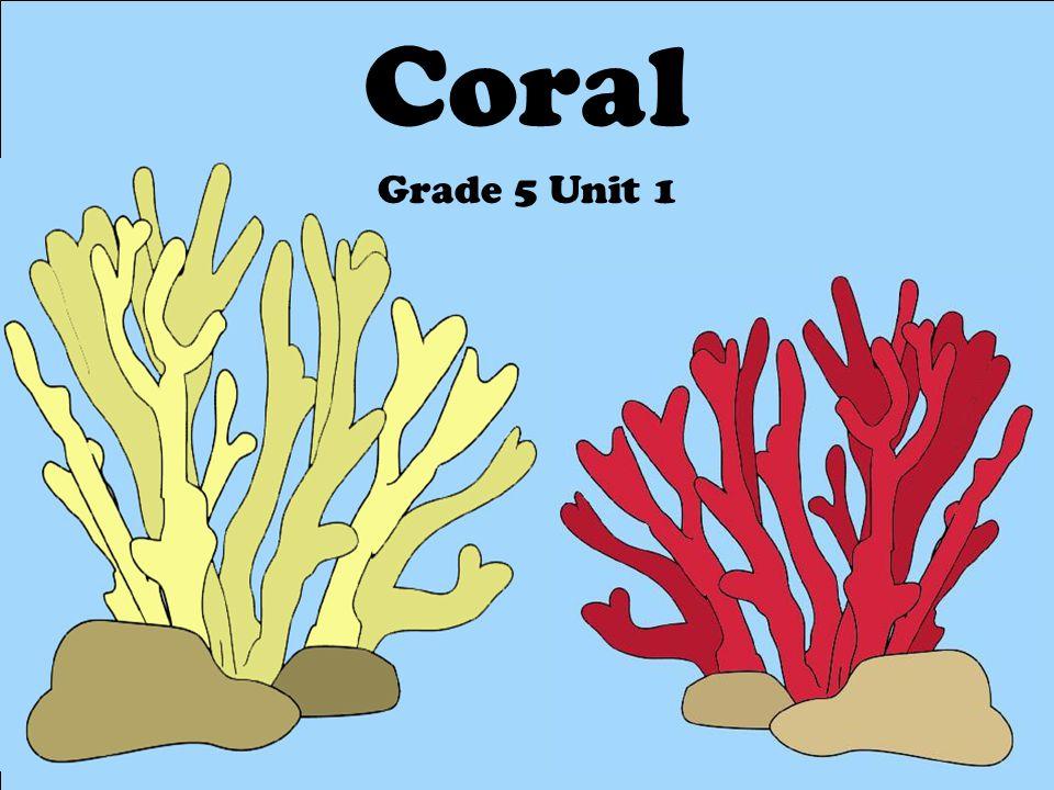 Coral Grade 5 Unit 1