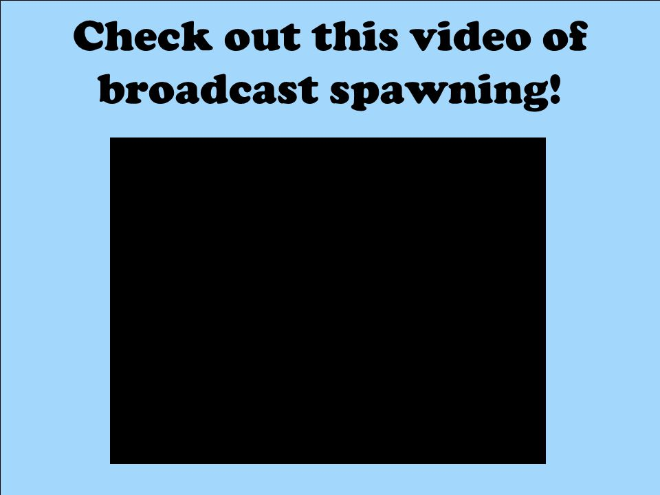 Check out this video of broadcast spawning!