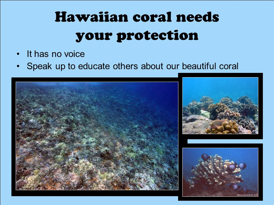 Hawaiian coral needs your protection It has no voice Speak up to educate others about our beautiful coral