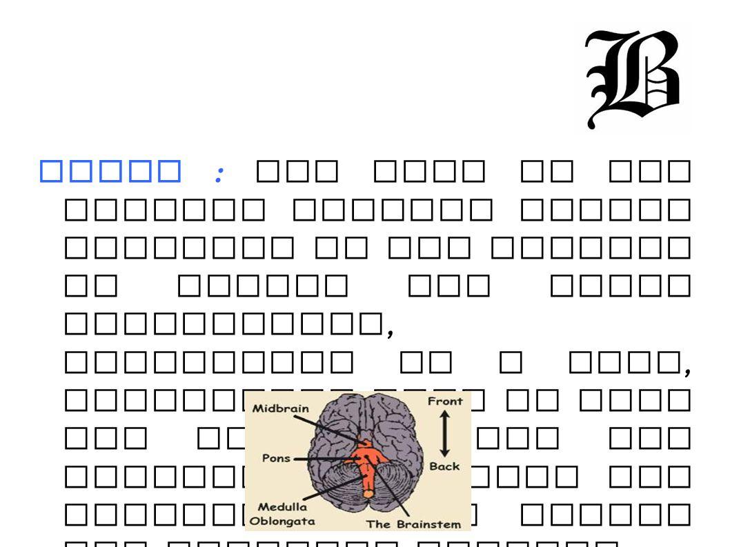 Occipital Lobe : one of the four subdivisions of the cerebral cortex.