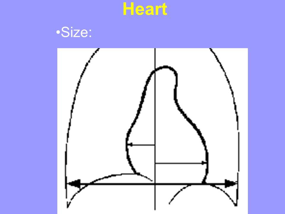 Heart Size: