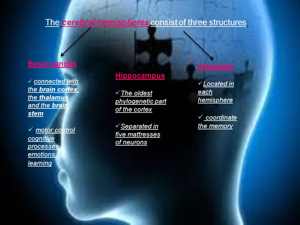 Basal ganglia connected with the brain cortex, the thalamus and the brain stem motor control cognitive processes emotions, learning Hippocampus The oldest phylogenetic part of the cortex Separated in five mattresses of neurons The cerebral hemispheres consist of three structures : Amygdala Located in each hemisphere coordinate the memory