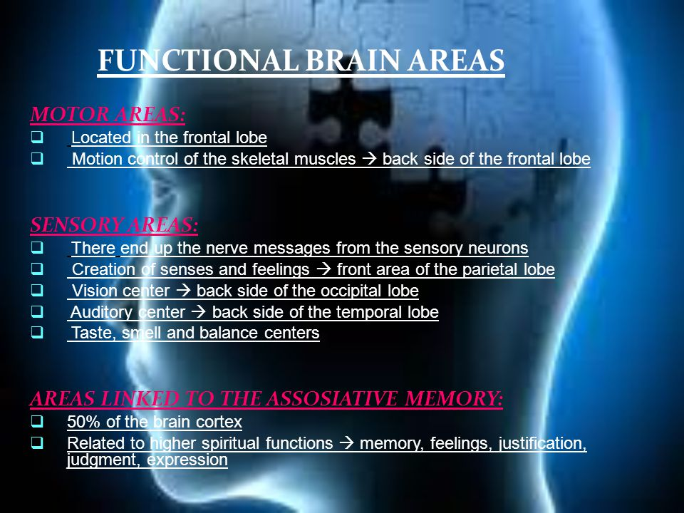 FUNCTIONAL BRAIN AREAS MOTOR AREAS:  Located in the frontal lobe  Motion control of the skeletal muscles  back side of the frontal lobe SENSORY AREAS:  There end up the nerve messages from the sensory neurons  Creation of senses and feelings  front area of the parietal lobe  Vision center  back side of the occipital lobe  Auditory center  back side of the temporal lobe  Taste, smell and balance centers AREAS LINKED TO THE ASSOSIATIVE MEMORY:  50% of the brain cortex  Related to higher spiritual functions  memory, feelings, justification, judgment, expression