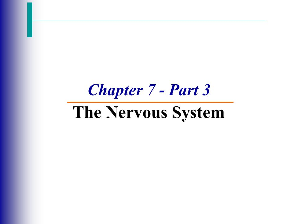Chapter 7 - Part 3 The Nervous System