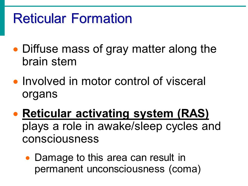 Reticular Formation  Diffuse mass of gray matter along the brain stem  Involved in motor control of visceral organs  Reticular activating system (RAS) plays a role in awake/sleep cycles and consciousness  Damage to this area can result in permanent unconsciousness (coma)